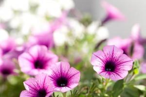 Blumen Home
